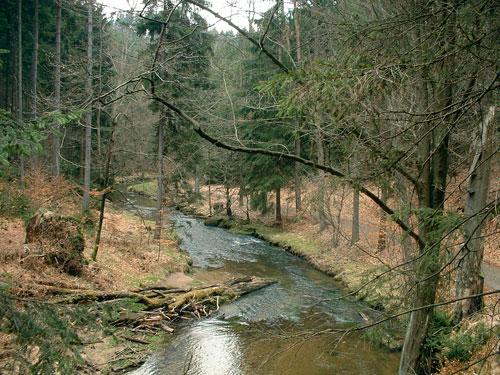 Die Kirnitzsch schlängelt sich durchs Grenzgebiet.