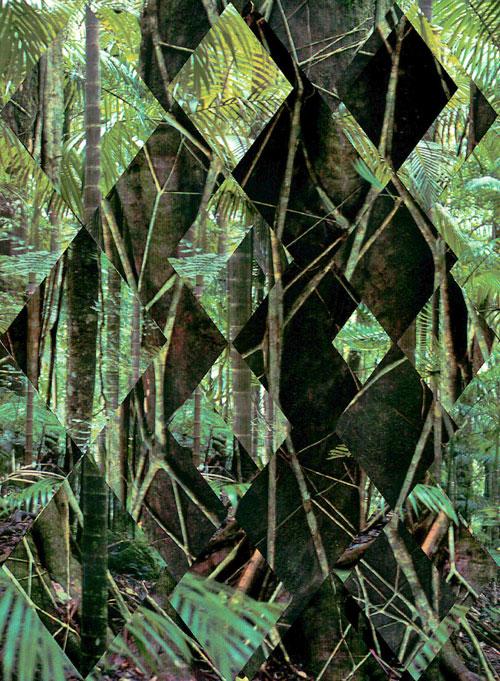 Daniel Steegmanns Thema ist der Wald.