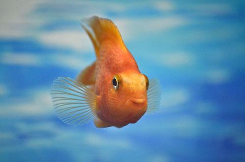 Große Augen im Aquarium